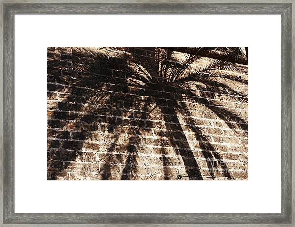 Palm Tree Cup Framed Print