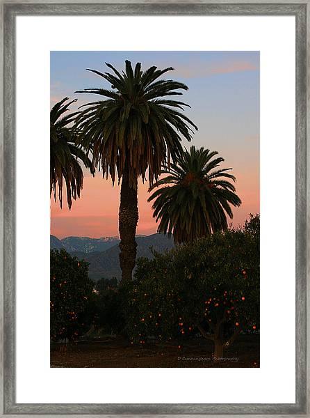 Palm Trees And Orange Trees Framed Print