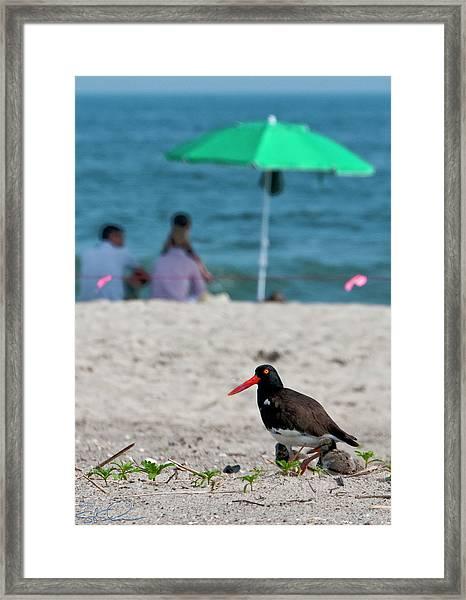 Parenting On A Beach Framed Print