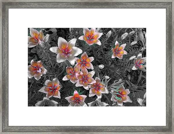 Pasqueflower In Silver Framed Print