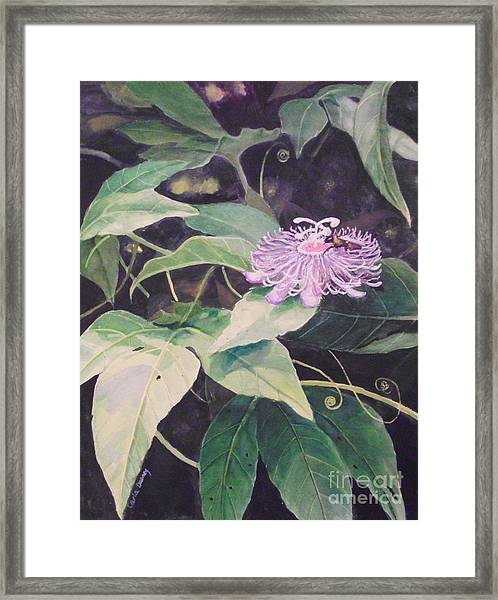 Passion Flower Framed Print by Carla Dabney