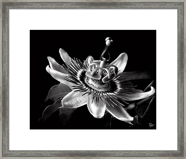 Passion Flower In Black And White Framed Print