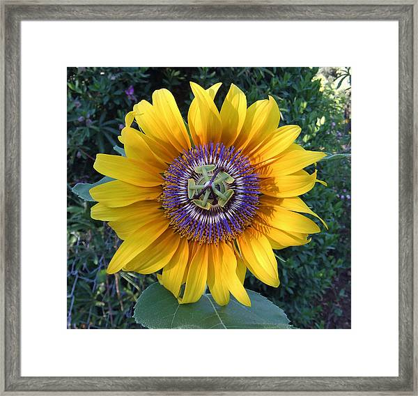 Framed Print featuring the pyrography Passion For The Sun by Eric Kempson
