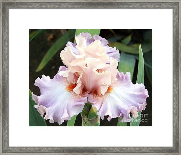 Pastel Variations Framed Print