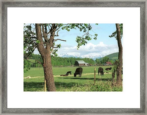 Pastoral Serenity Framed Print