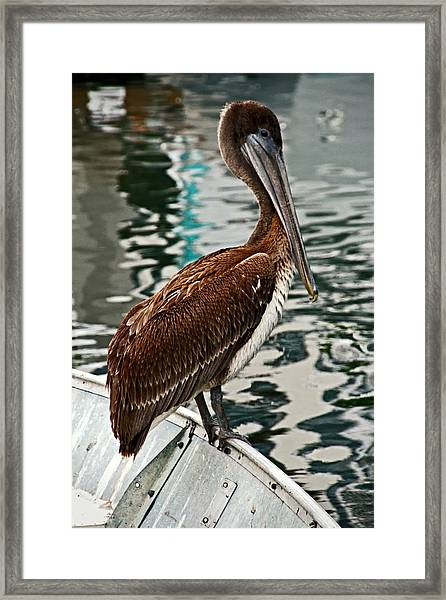 Peaceful Pelican Place Framed Print by Donna Pagakis