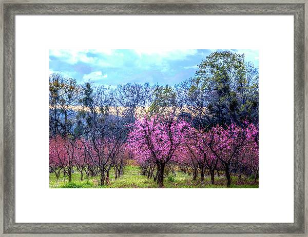 Framed Print featuring the photograph Peachy Blossum Scene2 by William Havle