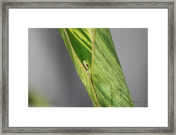 Peeking Out Framed Print
