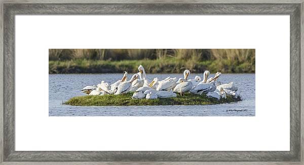 Pelican Island Framed Print