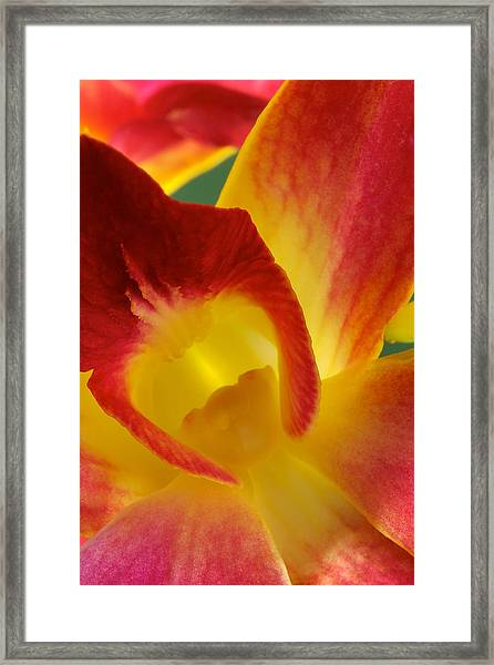 Photograph Of A Hope Orchid Flower Framed Print