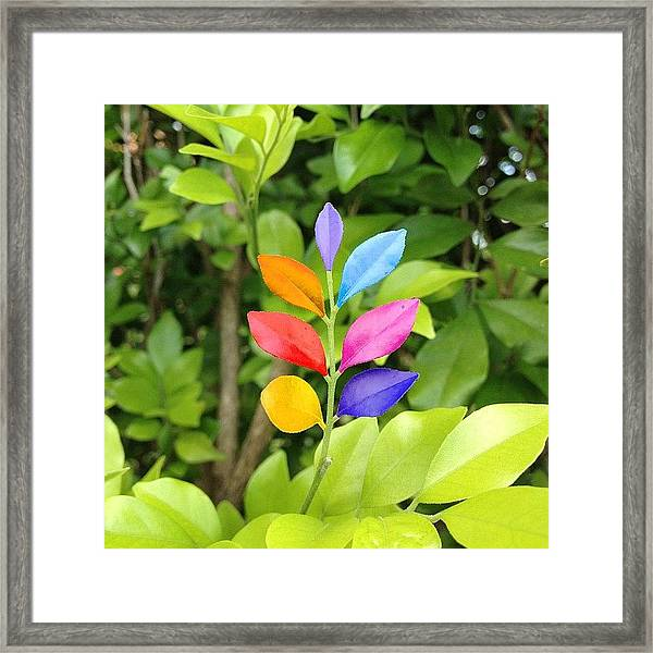 #photooftheday #bestoftheday Framed Print