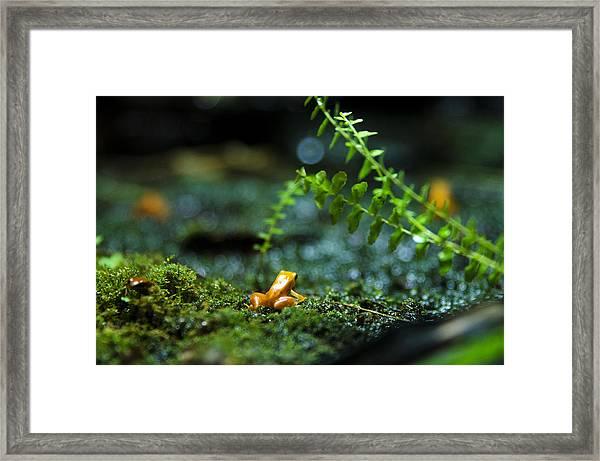 Pico Framed Print