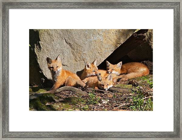 Pile Of Pups II Framed Print