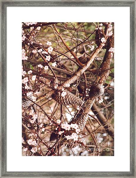 Pinecones And Cherry Blossoms Framed Print