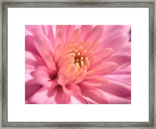 Pink Bloom Framed Print
