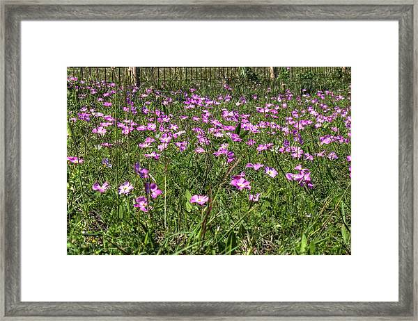 Pink Spring Flowers Framed Print
