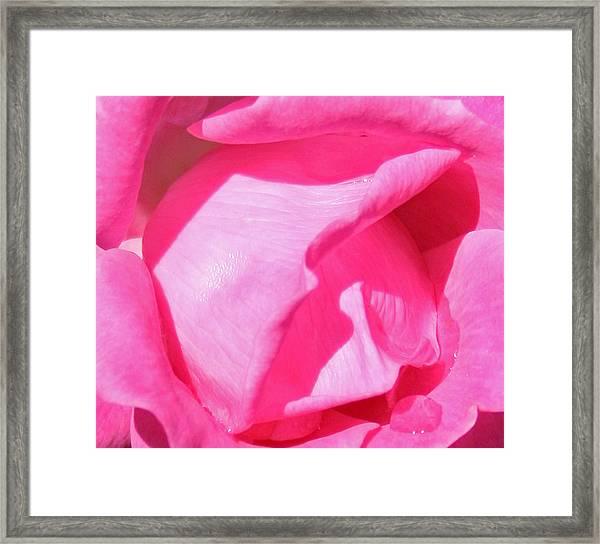 Pleasingly Pink Framed Print