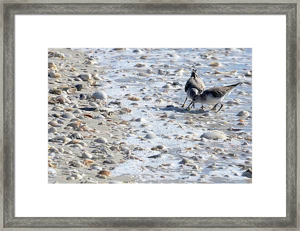 Plovers On Keewaydin Beach Framed Print