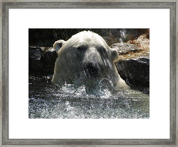 Polar Bear 3 Framed Print