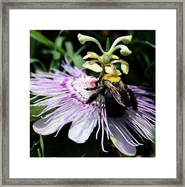 Pollen Collector Framed Print
