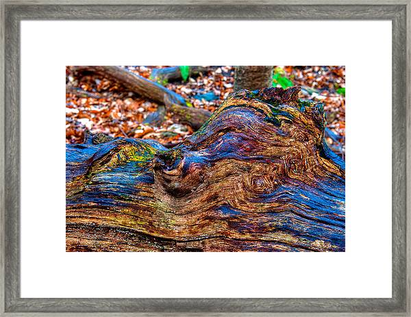 Popping Colors Framed Print