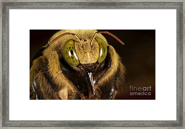 Portait Of Unknown Bee Framed Print
