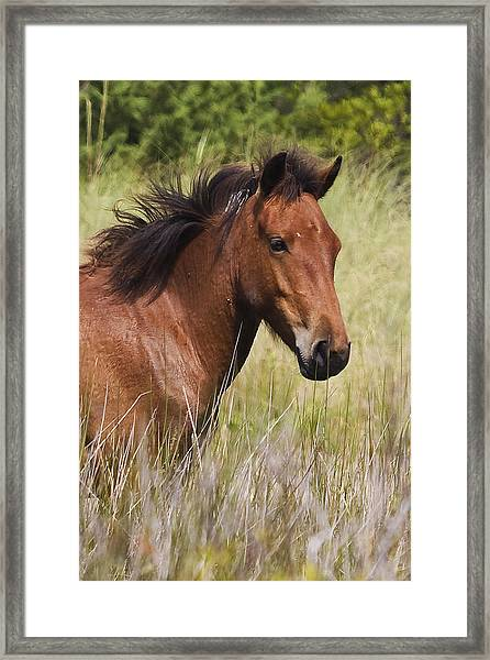 Portrait Of A Spanish Mustang Framed Print