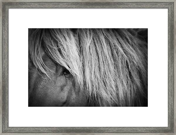 Portrait Of A Wild Horse Framed Print