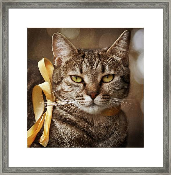 Portrait Of Tabby Cat With Yellow Ribbon Framed Print by by Sigi Kolbe