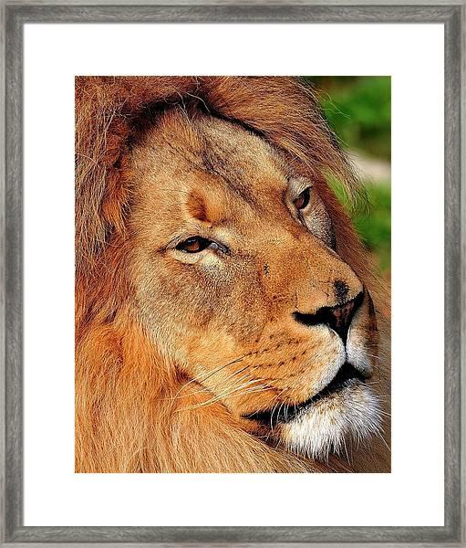 Portrait Of The King Framed Print