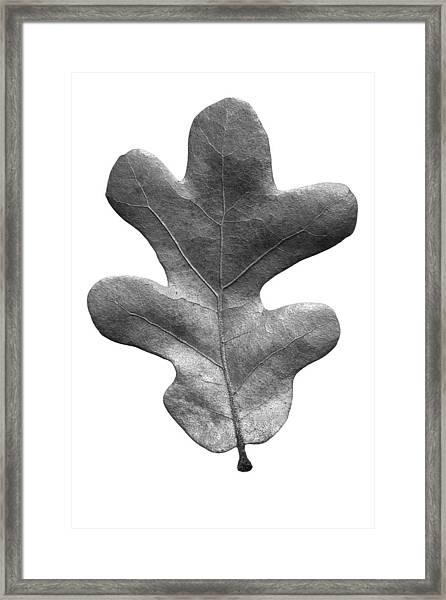 Post Oak Leaf Framed Print
