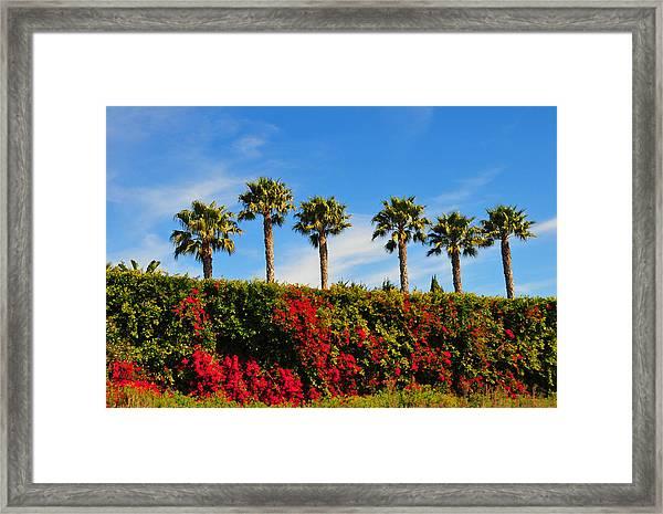 Pt. Dume Palms Framed Print
