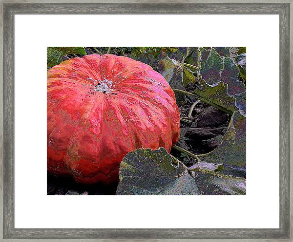 Pumpkin Harvest Framed Print