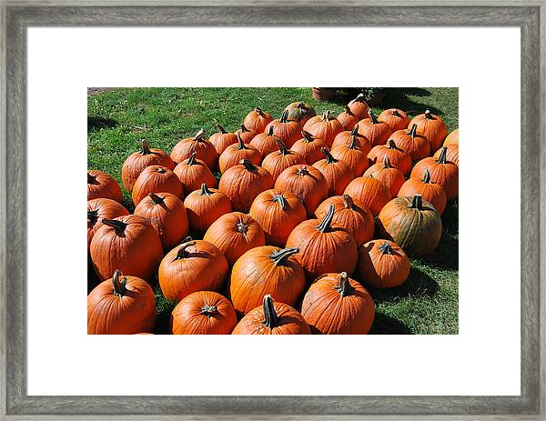 Pumpkins Galore Framed Print