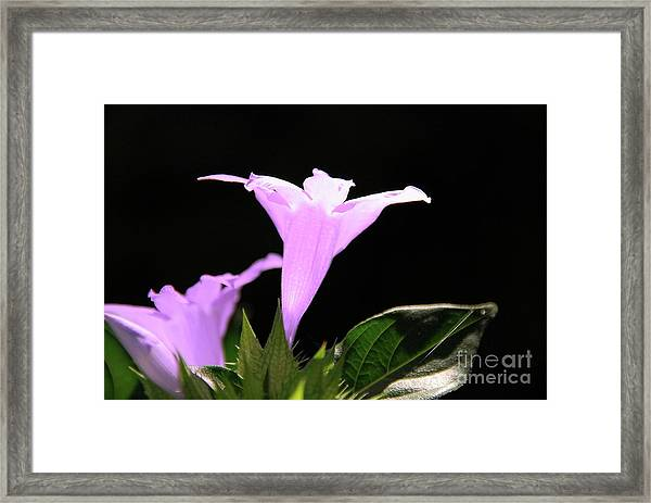 Purple Glow Framed Print