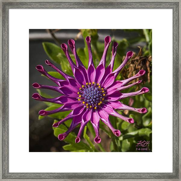Purple Sun Framed Print