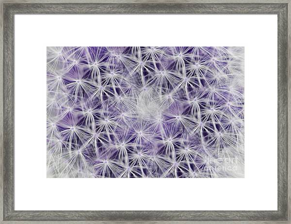 Purple Wishes Framed Print