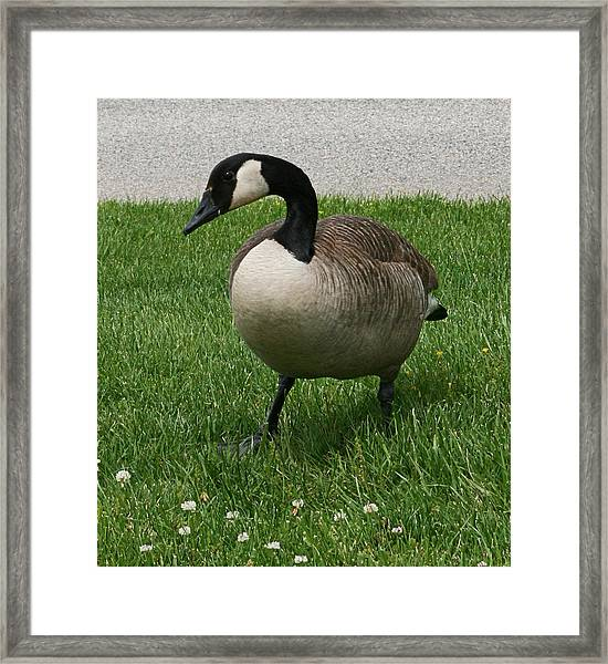 Put Your Right Foot In Framed Print