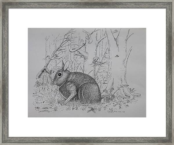 Rabbit In Woodland Framed Print
