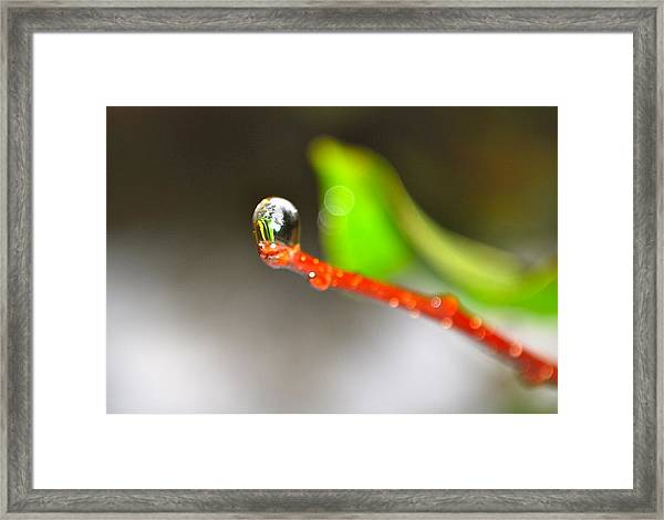 rain drops Tiny Wonder Framed Print by Gloria Warren