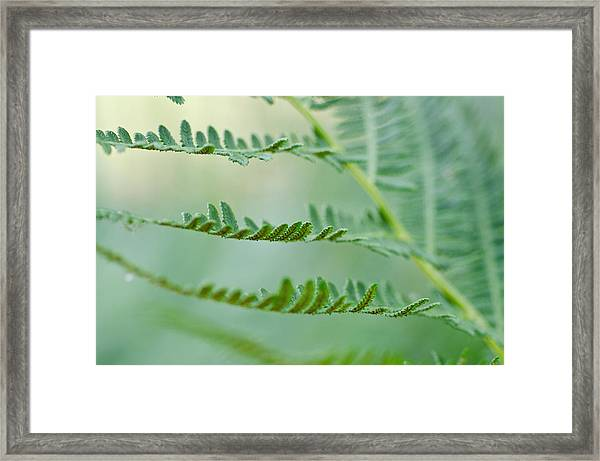 Reaching Ferns Framed Print by Margaret Pitcher