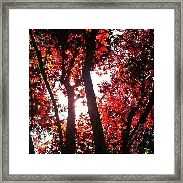 Reaching For Glory - Afternoon Light Framed Print