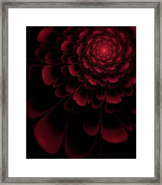 Red Beauty Framed Print