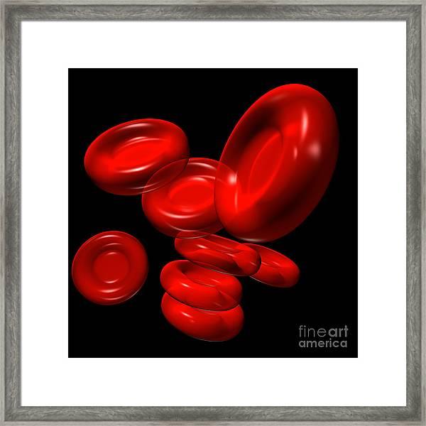Red Blood Cells 2 Framed Print