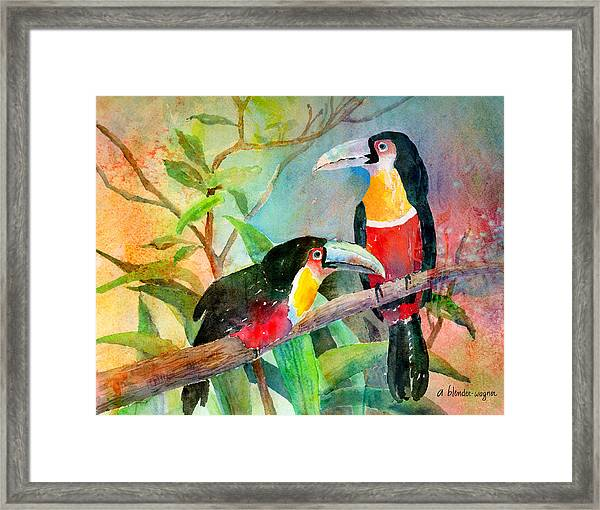 Red-breasted Toucans Framed Print
