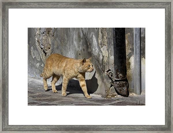 Red Cat In Burano Framed Print