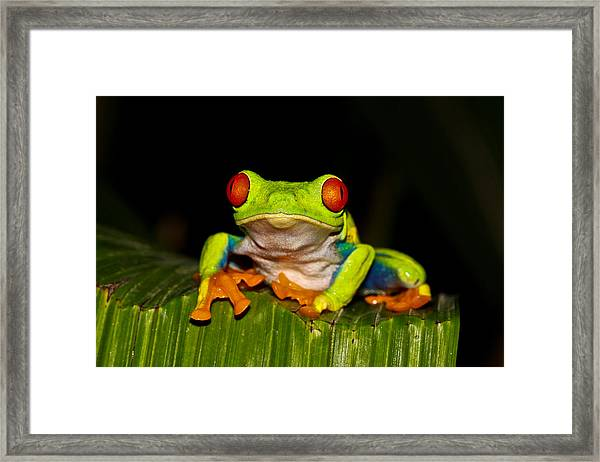 Red Eyes 1 Framed Print