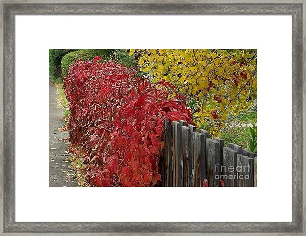 Red Fence Framed Print