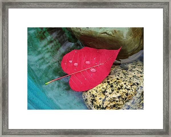 Red Leaf Love Framed Print