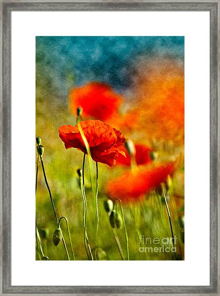 Red Poppy Flowers 01 Framed Print